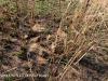 Oliviers Hoek Farm graves (7)