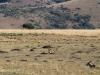 Lake Eland Reserve eland in grasslands (1)