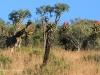 Lake Eland Reserve giraffe