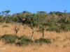 Lake Eland Reserve landscapes (1)