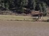 Lake Eland - Zip Line (21)