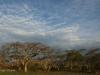 Ottos Bluff - Ukhutula - Acacia Sieberiana (1)