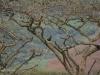 Ottos Bluff - Ukhutula - Crested Eagle (2)