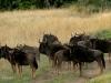 Ottos Bluff - Ukhutula - Wildebeeste