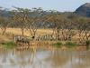 Ottos Bluff - Ukhutula - Zebra at Dam