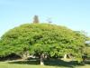 Botha House -  Garden tree & outlook (2)