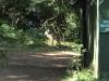 Umdoni Park Environmental Centre - Bushbuck (1)