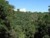 Paradise Valley Reserve - Umbilo River Walk (10)