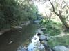Paradise Valley Reserve - Umbilo River Walk (12)