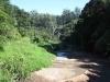 Paradise Valley Reserve - Umbilo River Walk (13)