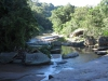 Paradise Valley Reserve - Umbilo River Walk (14)