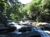 Paradise Valley Reserve - Waterfall & Umbilo River (9)