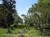 Bishopstow - Bishop Colenso Home  - Gardens - eastern facade -  (5)