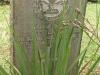 Fort Napier Cemetery CWGC 36522748 Pvt. T BEN..