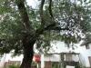 pmb-longmarket-street-voortrekker-museum-trees-1912-2