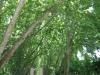 pmb-swartkops-road-kzn-botanic-gardens-hms-enchantress-bell-s-29-36-28-e-30-20-46-elev-680-2