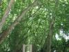 pmb-swartkops-road-kzn-botanic-gardens-hms-enchantress-bell-s-29-36-28-e-30-20-46-elev-680-3