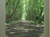 pmb-swartkops-road-kzn-botanic-gardens-hms-enchantress-bell-s-29-36-28-e-30-20-46-elev-680-5