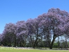 St Johns College cricket and rugby fields (8)