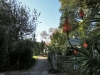 The Cedars  - back garden (1)