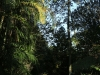 The Cedars  - gardens (2)