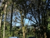 The Cedars  - gardens (5)