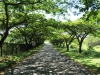 natal-parks-board-ezemvelo-duncan-mckenzie-drive-s-29-34-24-e-30-19-35-elev-933m-1