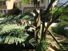 natal-parks-board-ezemvelo-duncan-mckenzie-drive-statue-4