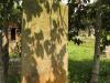 Voortrekker Cemetery East grave illegible (2)