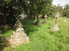 Voortrekker Cemetery East grave Harry Soloman 1921 & Rose Coughlan