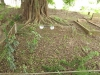 Voortrekker Cemetery West - Grave 5137 & 5521