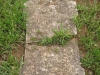 Voortrekker Cemetery West - Grave Maria Headley aged 79yrs