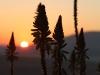 Dusk to Dawn - Piet Retief sunset (4)