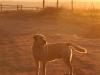 Dusk to Dawn farm animals (1)