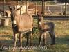Dusk to Dawn farm animals (2)