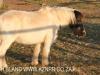 Dusk to Dawn farm animals (4)
