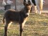 Dusk to Dawn farm animals (5)