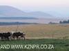 Dusk to Dawn - farm vistas (10)