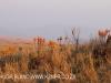 Dusk to Dawn - farm vistas (5)