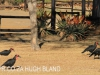Rorkes Drift Lodge Ground Hornbill (1)