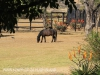Rorkes Drift Lodge stables (1.) (2)