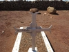 Schuinshoogte Military Cemetery (East) - Anglo Boer War (1899 -1900) - Grave  1485  Pte A Nolloth - 1st Devons - 22 Jan 1900 (3)