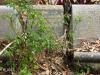 Scottburgh Cemetery grave Miller & Jackson