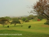 Scottburgh Golf Club fairways (3)