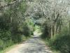 shongweni-dam-forest-roads-1