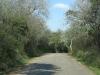 shongweni-dam-forest-roads-3