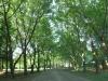 summerveld-entrance-drive-1_0