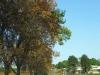 summerveld-entrance-drive-3