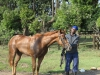 summerveld-horse-groom