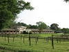 summerveld-stables